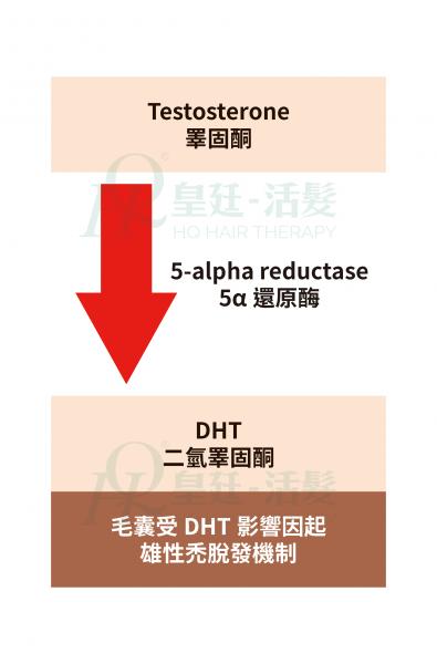 dht作用